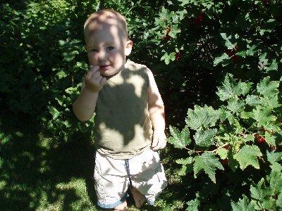 Jonatan äter vinbär